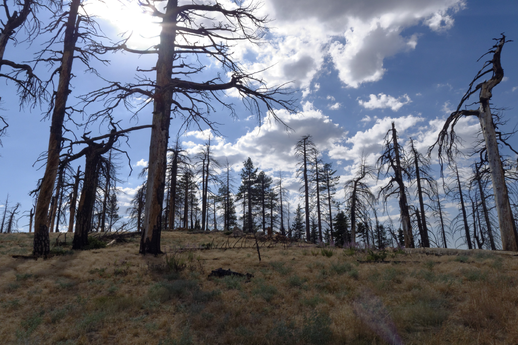 Sewart Mountain – Photo Gallery