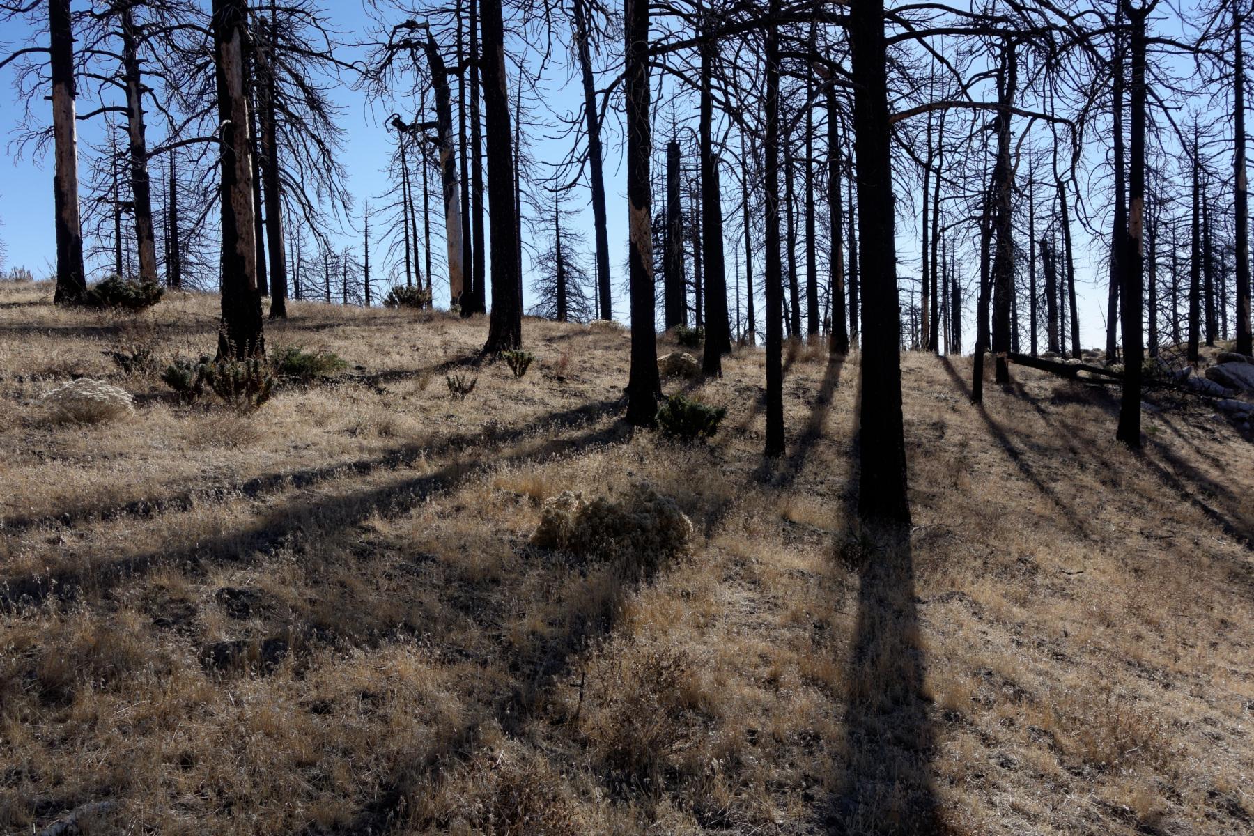 Rabbit Peak, Granite Mtn, Round Top, Iron Mtn – Photo Gallery