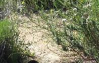 Cucamonga Peak, Flowing Creek – Trail Video